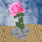 """A Rose in The Desert"" by SeaAngel"