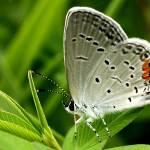 """Butterfly"" by nova"