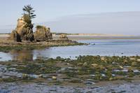 Oregon Tidal Pools