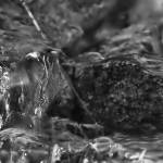 """""""Pebbles in Stream - Black and White"""" by nostalgiawest"""