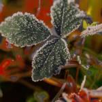 """""""Frost"""" by EnjoyART"""
