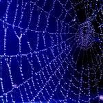 """""""Spider Web"""" by EnjoyART"""