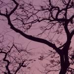 """Branches"" by raj"