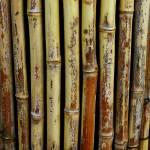 """Bamboo"" by JennyKSkaggsPhotography"