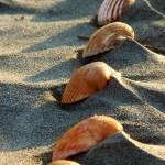 """She Sells Sea Shells"" by JennyKSkaggsPhotography"