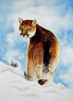 Winter Cougar