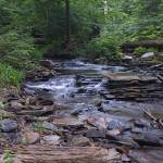 """Creek at Ricketts Glen State Park, PA"" by PaulDRobertson"
