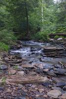 Creek at Ricketts Glen State Park, PA