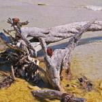 """washed up on Sanibel Island"" by lwoodburn"
