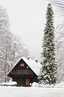 Bohinj valley at Christmas , Slovenia