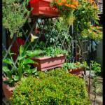 """""""Rincones de mi jardín"""" by tiare"""