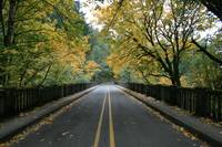 Latourell Falls, Columbia Gorge 10-30-08 Bridge