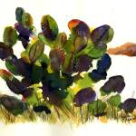 """Cactus"" by GayelaChapman"