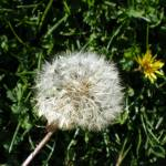 """Make a Wish"" by HomesteadMel"