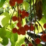 """Berry Nice"" by HomesteadMel"