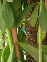 Colorful Lizard in Tree