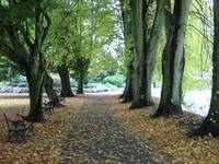 Autumn Path, FitzGerald's Park, Cork