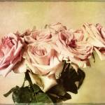 """Retro Roses"" by JessicaJenney"