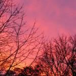 """""""WA Sunset"""" by HomesteadMel"""