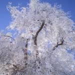 """""""WA Winter"""" by HomesteadMel"""