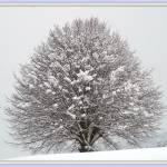 """Snow Tree"" by Liaonet"