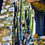 """La Aduana Church Cactus #2"" by johncorney"