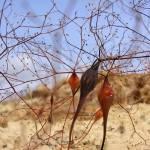 """Desert Stalks"" by nostalgiawest"