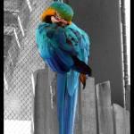 """Macaw"" by tinkerroll21"