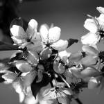 """Spring Flowers BW"" by WaynePhotoGuy"