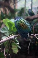 Bird in Zoo