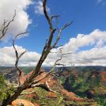 """Waimea Canyon - Kauai, Hawaii"" by PJPHOTO"