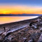 """""""Driftwood Garden"""" by Surrealize"""