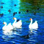 """""""3 geese"""" by dedees"""