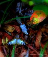 Butterfly In the Leaves