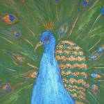 """peacock by Kim Wyatt"" by kimwyatt"