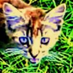 """Pretty Kitty Macy"" by JudyMarisa"