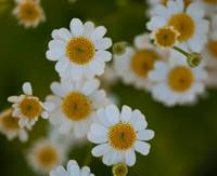 DoF and Daisies
