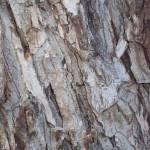 """Tree Bark"" by MichaelClydeEllis"