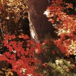 """autumn reds"" by Tritch-Pix"