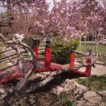 """peace gardens"" by Tritch-Pix"
