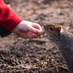 """Josh feeding a squirrel"" by Jeni_Harney"