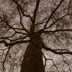 """London Tree"" by benlawlor"