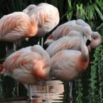 """A Flamingo Dawn"" by NaturePlusStudios"