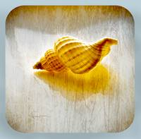 simple spiral shell. Sea shell series 2