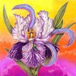"""The Paisley Iris"" by AlmaLee"
