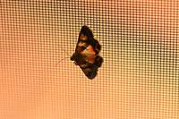Moth on screen