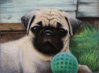 Young pug with ball