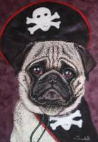 Duffer the Pirate Pug