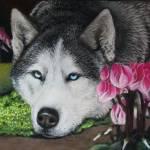 """""""Husky in Pink Cyclamen"""" by silverpineart"""