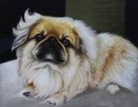 A well balanced Pekinese